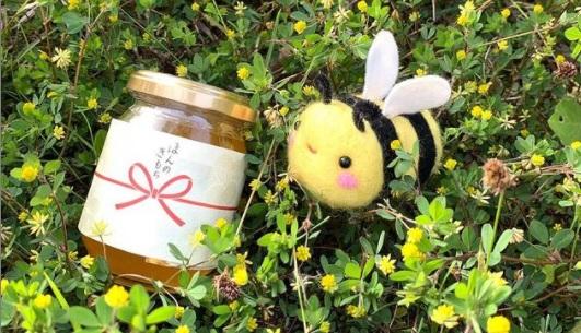 チクマ養蜂